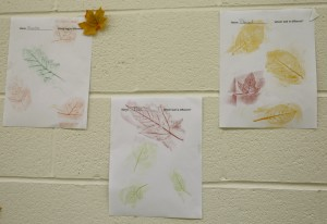 leaf-rubbing-preschool