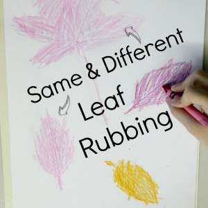 same-different-preschool-leaves
